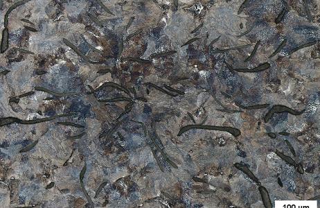 esame-micrografico-di-una-ghisa-grigia-microstruttura-costituita-da-grafite-lamellare-in-matrice-perlitica